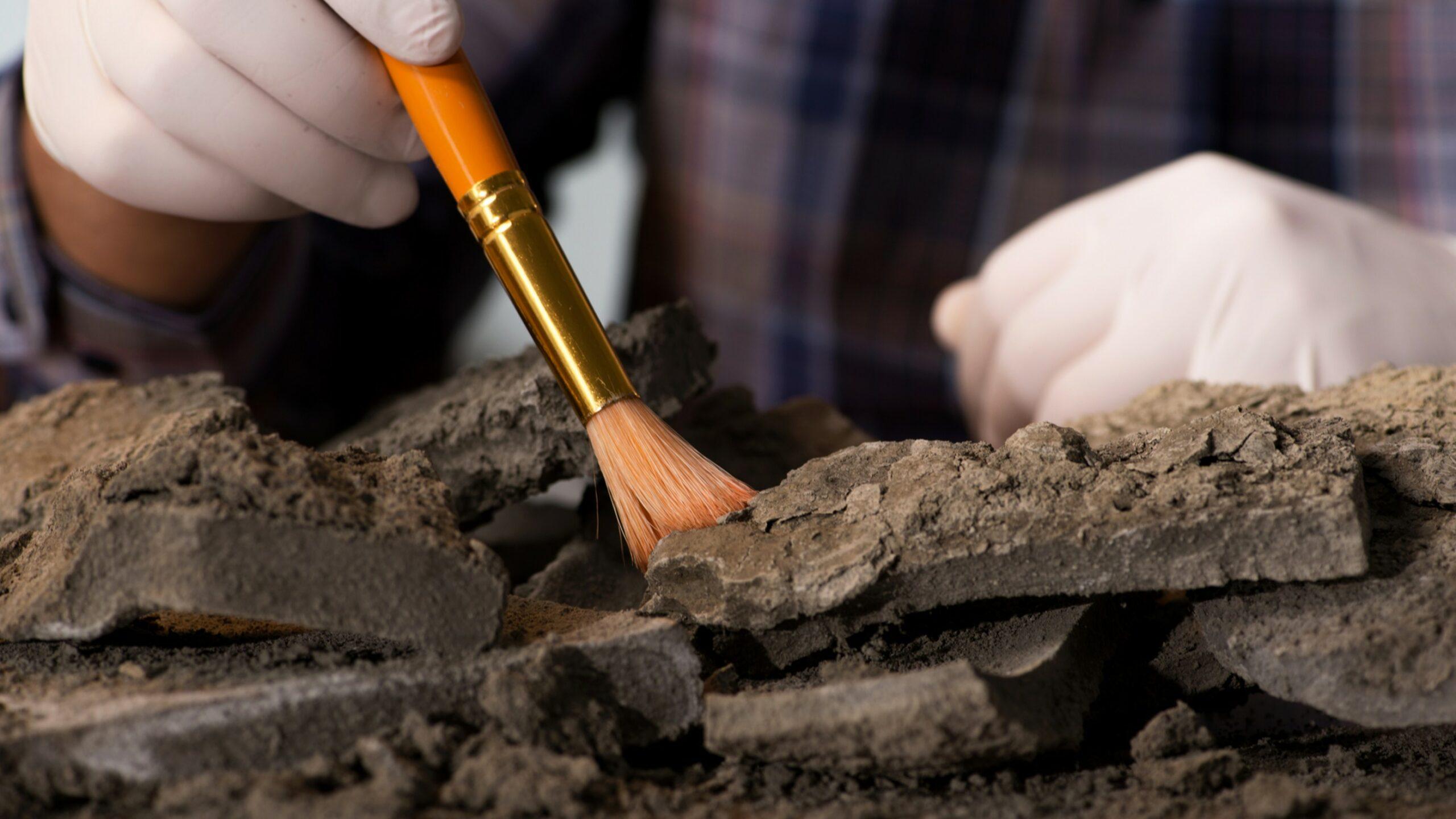 archeoloog nodig